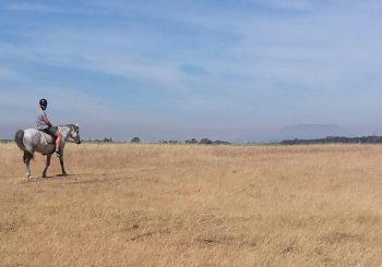 Stellenbosch Horse Riding