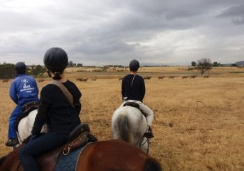 Horse Riding Safari
