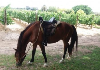Wine Tasting Horse Rides